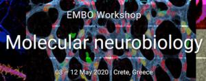 EMBO Workshop: Molecular neurobiology